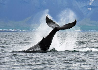 Whales tail visible