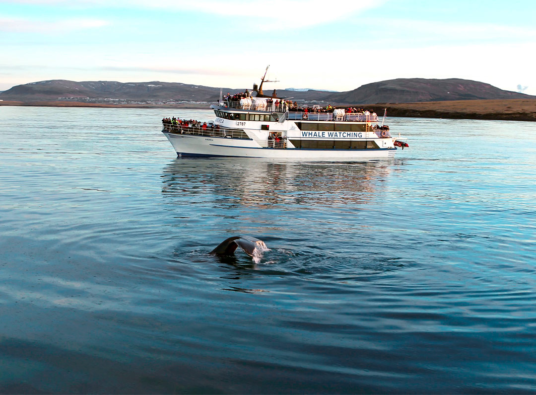 Iceland-Luxury-Tours-Whale-watching-3