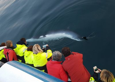 a small whale spotted near boat